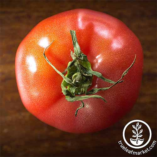 Top-down shot of a 'Pink Brandywine' tomato with light red flesh and a green stem, on a brown wood background.