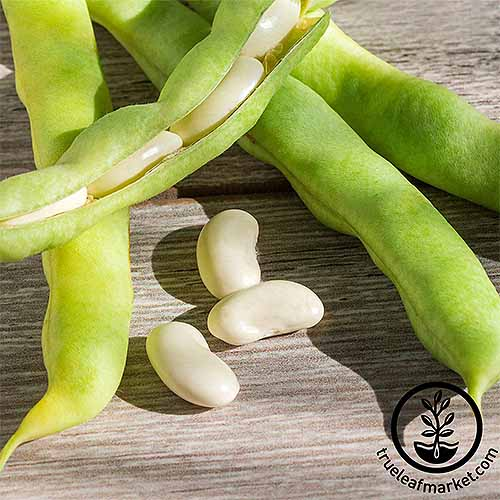 'Henderson' lima beans both with and without their pods, on a wood surface.