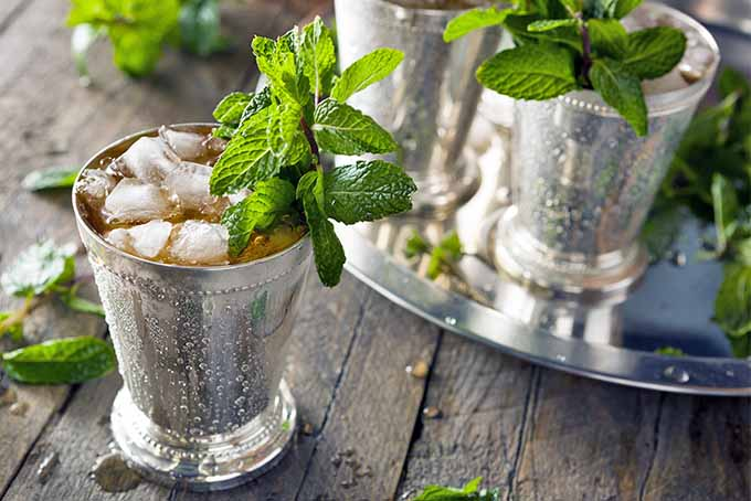 A mint julep in a silver cup with ice and a sprig of herbs for garnish, on a brown wood surface with a silver tray of more beverages in the background.