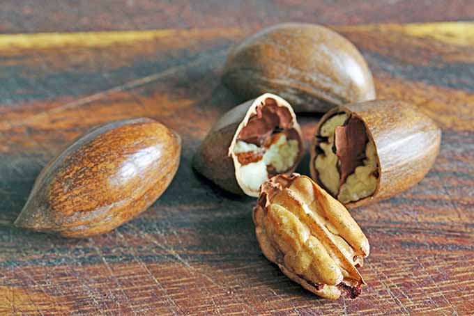 Two whole, one broken, and one shelled pecan on a brown wood surface.