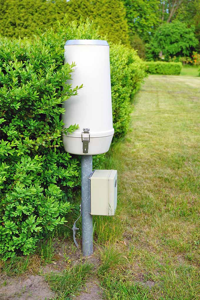 A professional rain gauge with a large plastic catchment container, metal pole for support inserted in the ground, and a beige control box, in a greenish-brown lawn with pruned hedges forming a wall to the left.