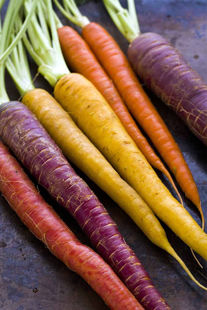 Red, purple, orange, and yellow carrots arranged in a row.