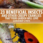 A collage of photos showing different types of beneficial insects in a garden setting.