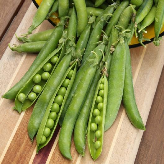 Growing Garden Peas: Learn How To Plant And Grow Peas At Home