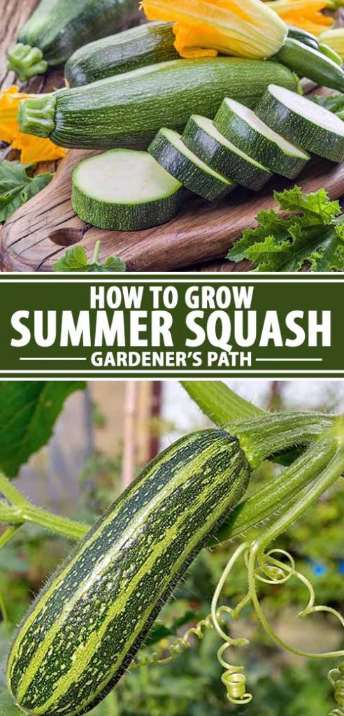 A collage of photos showing summer squash and zucchini growing in a garden.