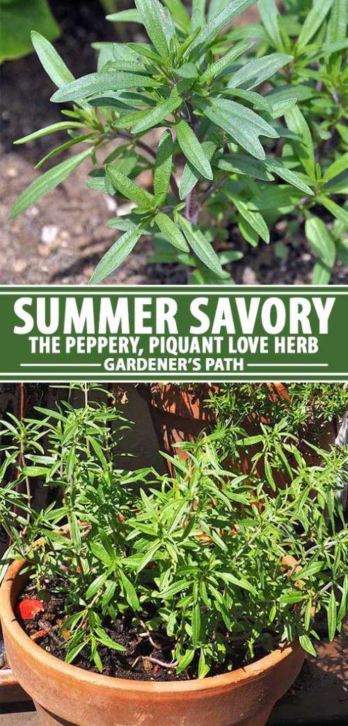 Uma colagem de alfinetes mostrando diferentes vistas do sabonete de Verão num jardim.