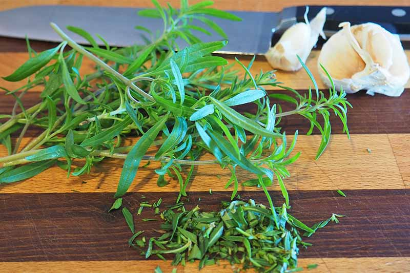 Sprigs of summer savory next to minced green herbs and a head of garlic, on a dark and light striped wooden cutting board with a chef's knife with a black handle.