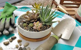 A succulent arrangement in a round, shallow, white ceramic planter with a bamboo base, on an aqua and white diamond-patterned tray with gray and green garden gloves, a shovel with a gray and green handle, and scattered pebbles, with a brown wooden outdoor chair with a white cloth seat cushion in the background.