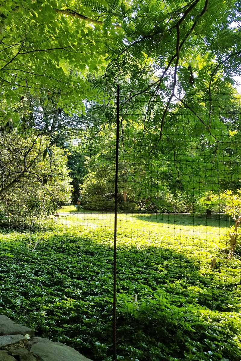 Vertical image of view through deer fencing of dappled sunlight on a lawn and trees.