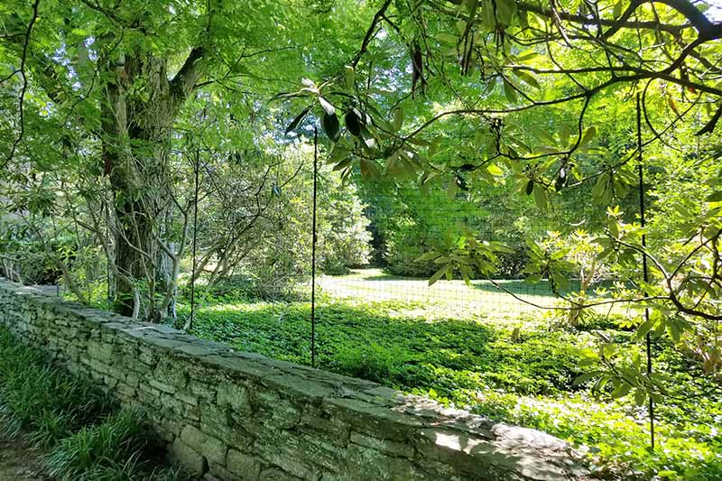 Black net deer fencing alone a stone retaining wall, with grass and trees on the other side.