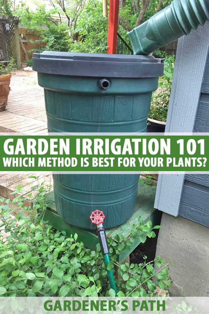 A dark green plastic rain barrel with a gutter hose running into the top and garden hose coming out the bottom, leading away from the side of the house to plants below.