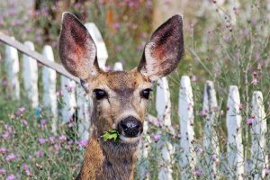 Get Them Deer Out of Here with These Tips