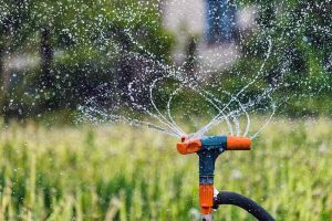 Hydrating Your Landscape: Which Irrigation Method Is Best for You and Your Plants?