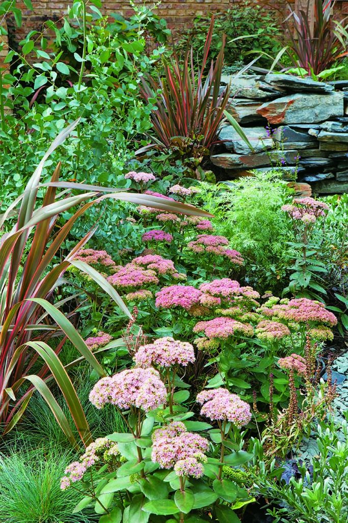 A shady garden bed planted with Sedum telephium 'Matrona', eucalyptus, Phormium 'Jester', and Festuca glauca 'Elijah Blue' along a rock wall.