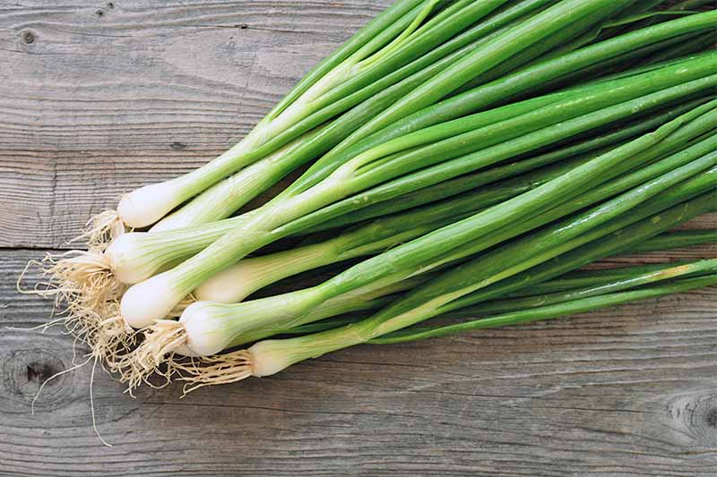 Top-down image of a pile of green onions with small white bulbs and off-white roots, on a brown wood surface.