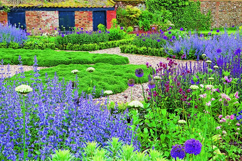 Gravel garden pathway with Nepeta 'Six Hills Giant', Allium nigrum, A. hollandicum 'Purple Sensation', Aquilegia vulgaris var. stellata 'Ruby Port', carpet of thyme, and A. vulgaris var. stellata 'Nora Barlow' growing along either side, leading up to a brick building.