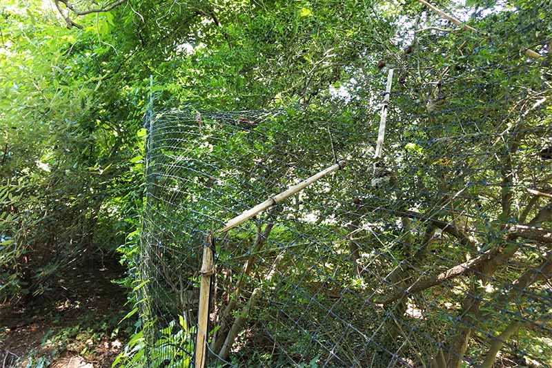 Damaged deer fencing with a broken bamboo support, with foliage in the background.