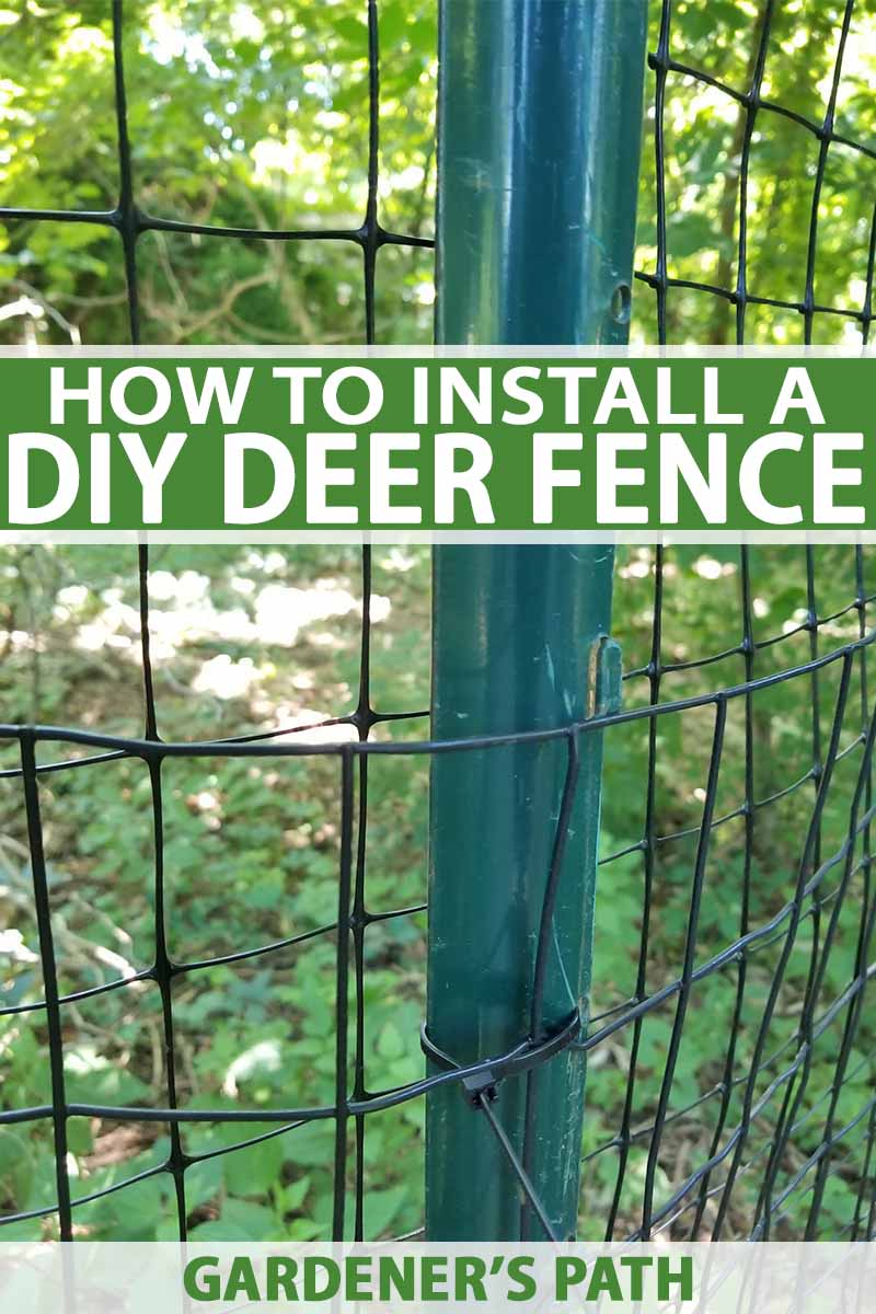 How to Install a Deer Fence to Keep Wildlife Out | Gardener's Path