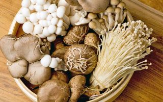 The Top 11 Mushroom Growing Kits for Home Gardeners