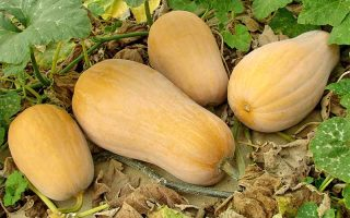 The Complete Guide to Growing Winter Squash