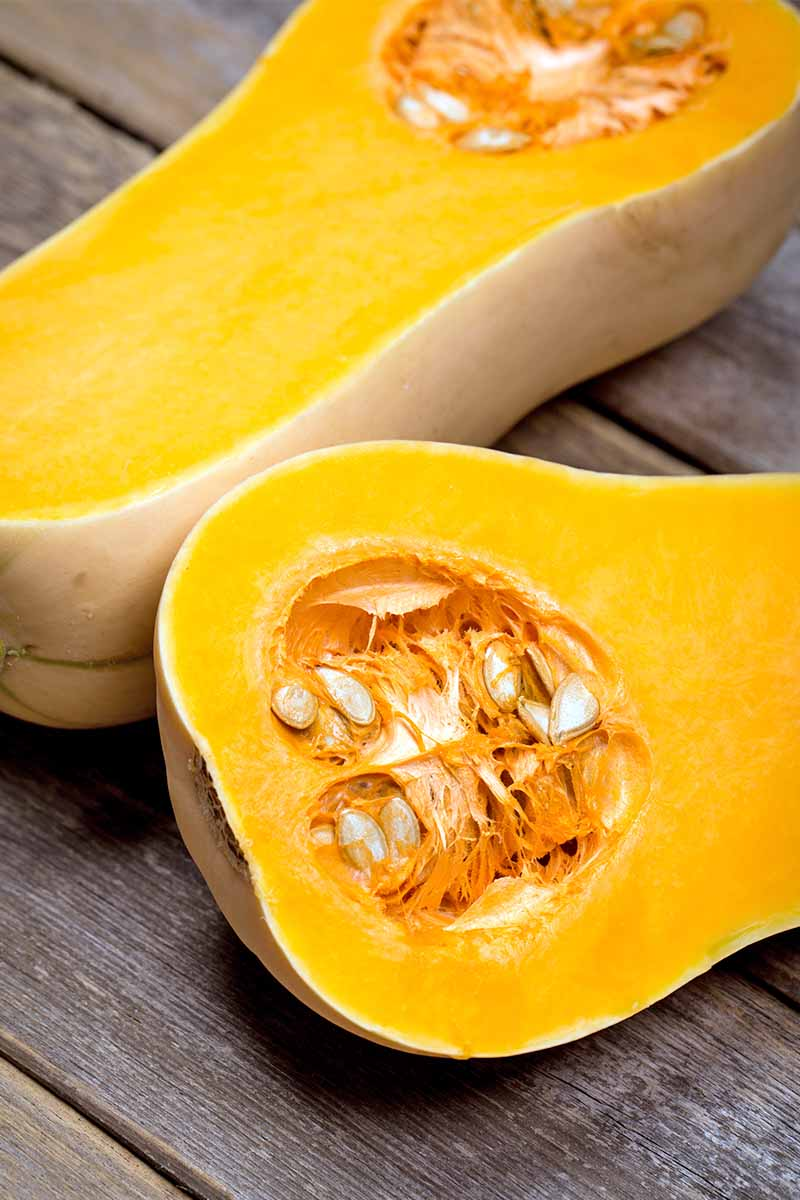 A butternut squash cut in half, to show the orange flesh and seeds inside.