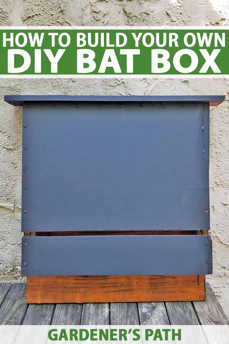 How to Build a Bat Box with DIY Instructions | Gardener's Path Large Bat House Plans on large workbench plans, large barn plans, large chicken tractor plans, large worm bin plans, large pergola plans, large bat doors, large bat clip art, sears craftsman style house plans, grey squirrel house plans, large picnic table plans, large bats in philippines, finished basement ranch floor plans, box wood duck house plans, bat box plans, bat shelter plans, large animals, hummingbird house plans, large cupola plans, large carport plans, butterfly house plans,