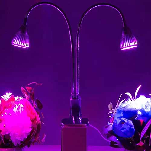 Double-necked grow light, shining purple and blue light onto plant specimens, with a dark purple background.
