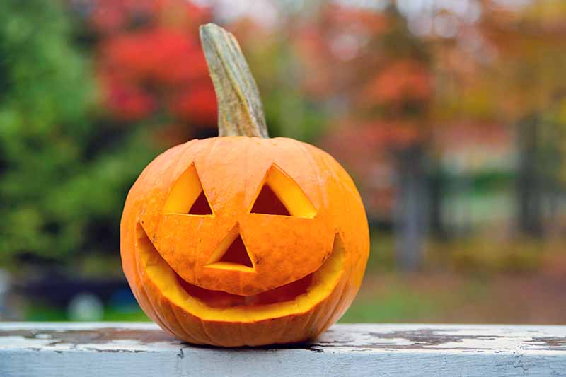 A small, smiling carved pumpkin with colorful autumn trees in the background.