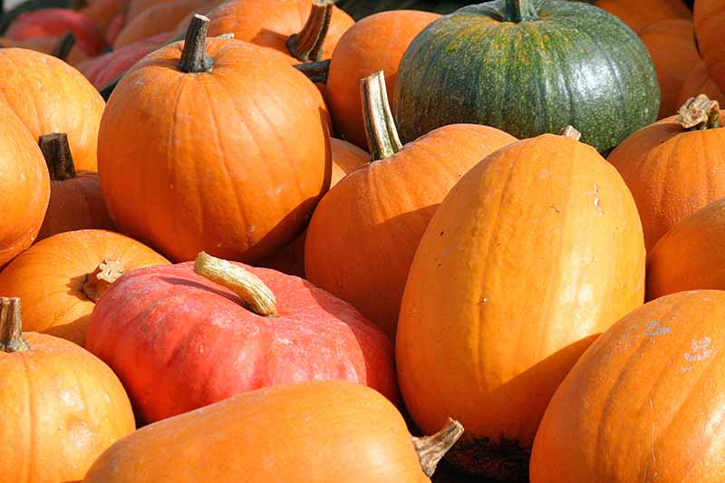 A pile of orange, red, and green pumpkins for Halloween, in various shapes.