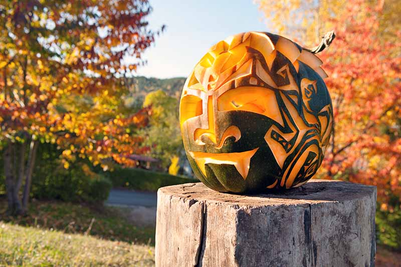 An intricately carved green and orange pumpkin on a tree stump, with fall foliage in bright sunshine in the background.