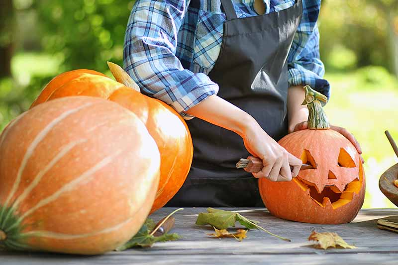 A person wearing a blue plaid shirt and an apron carves a jack-o'-lantern, with more large orange pumpkins to the left, on a wood work surface with scattered fall leaves and green foliage in soft focus in the background.