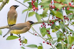 Guide to Backyard Birds and How to Attract Them to the Garden
