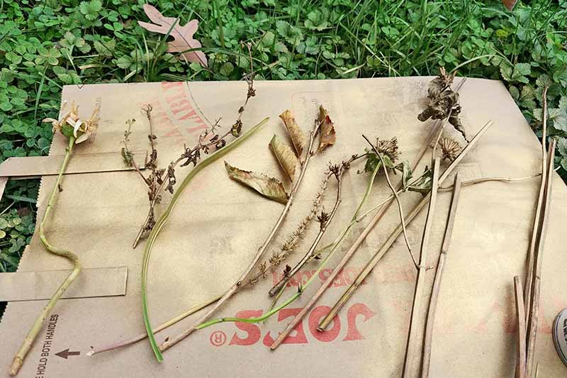 Stems and twigs from the garden have been coated with metallic spray paint, arranged in a row on a brown paper shopping back, on a green lawn of grass and clover.