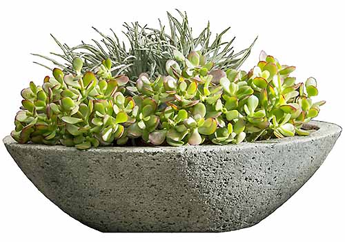 A round stone planter filled with succulents, isolated on a white background.