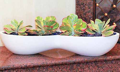 An oblong, bean-shaped white planter filled with succulents, on a brown surface.