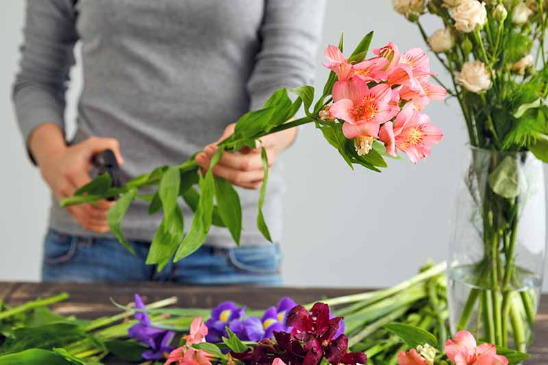 A woman in a gray sweater and blue jeans holds gardening shears in one hand and a stem of Alstroemeria with pink blossoms, with more cut flowers on a wood work surface in front of her, a glass vase of white roses, and a gray background.