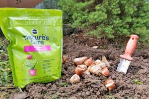 Bone Meal: Friend or Foe? Learn How to Use It in Your Garden