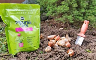 A light green plastic bag of MiracleGro organic bone meal to the left of a pile of brown flower bulbs and a garden knife with an orange handle, in loose brown soil, with an evergreen in the background.