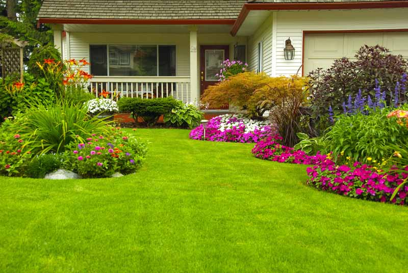 A well fertilized and manicured front lawn with lush green grass and flower beds.