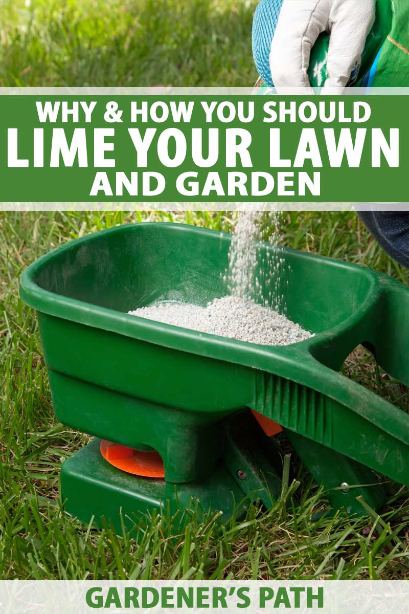 Why & How You Should Lime Your Lawn and Garden | Gardener's Path