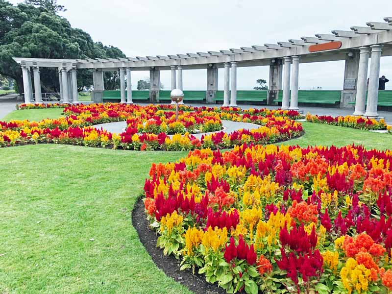A park setting with multi-color Plume-Type Celosia Plantings in a Landscaped Park.