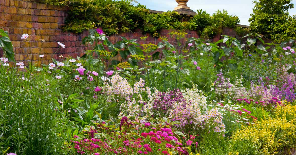 17 Flowering Perennials That Will Grow Anywhere Gardener S Path