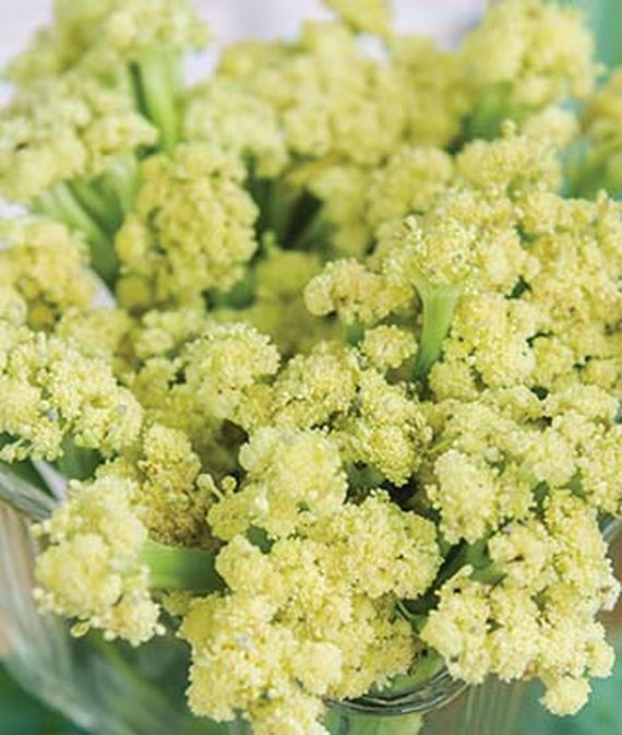 Closeup photo of the loose florets of the fall oriented Fioretto 85 variety of cauliflower.