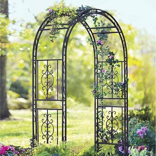 Iron plant arbor growing in a garden, with flowers in the foreground and green grass and trees in the background.