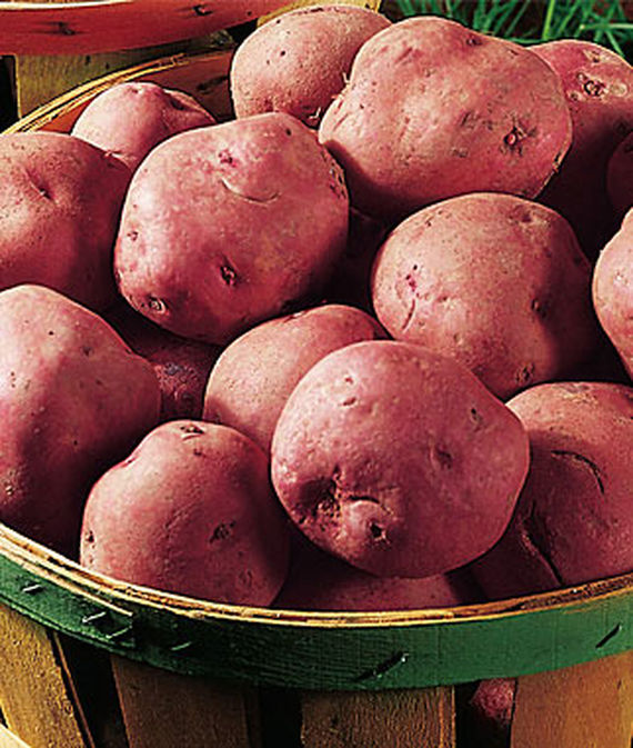 Red Pontiac potatoes in a wooden basket.