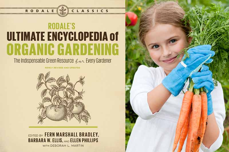 A Collage of two photos including Rodale's Ultimate Encyclopedia of Organic Gardening book cover and a little girl holding organically grown freshly harvested carrots in a garden setting.