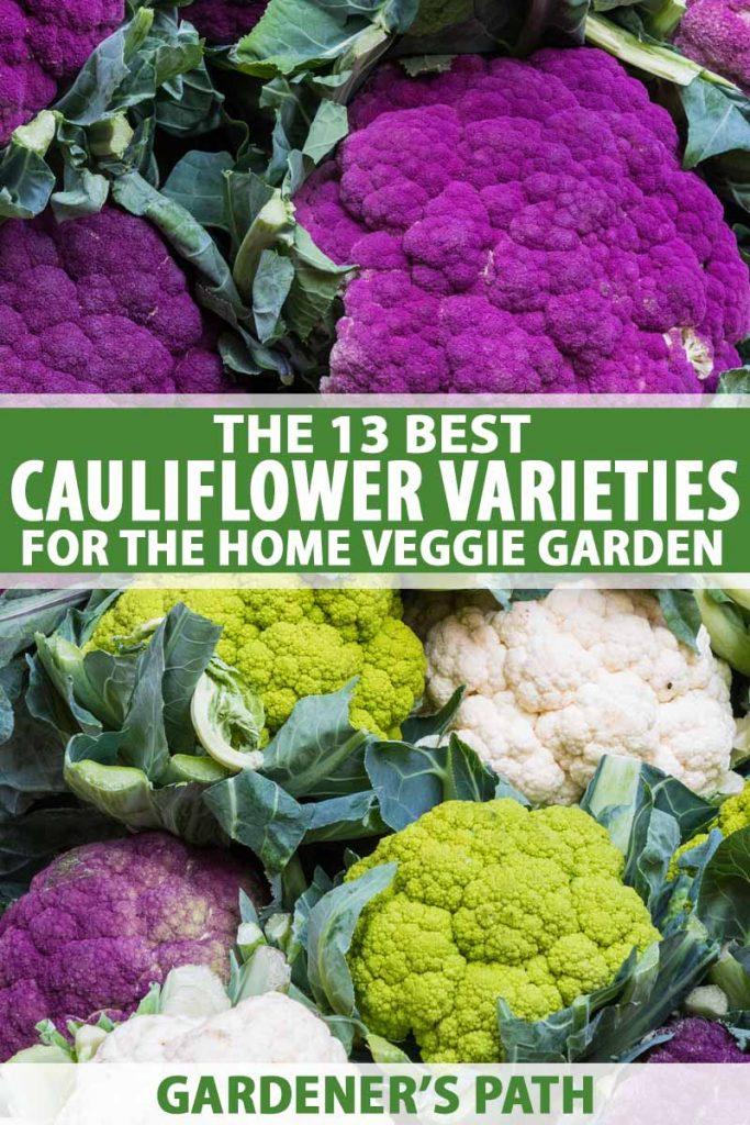 White, green, and purple cauliflower heads on display.