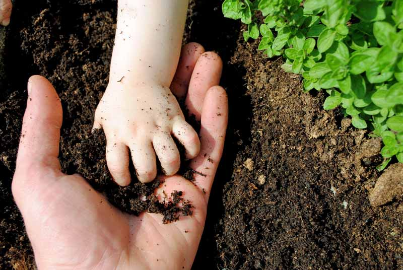 The hand of a toddler placing organic garden soil into the hand of an adult.