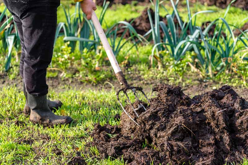 A gardener uses a tined fork to move compost.