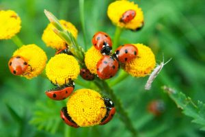 23 Beneficial Insects and Other Creepy Crawlies That Your Garden Will Love